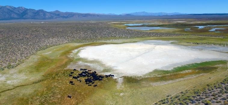 Dronefoto's & dronefilms: De mooiste beelden vanuit de lucht!